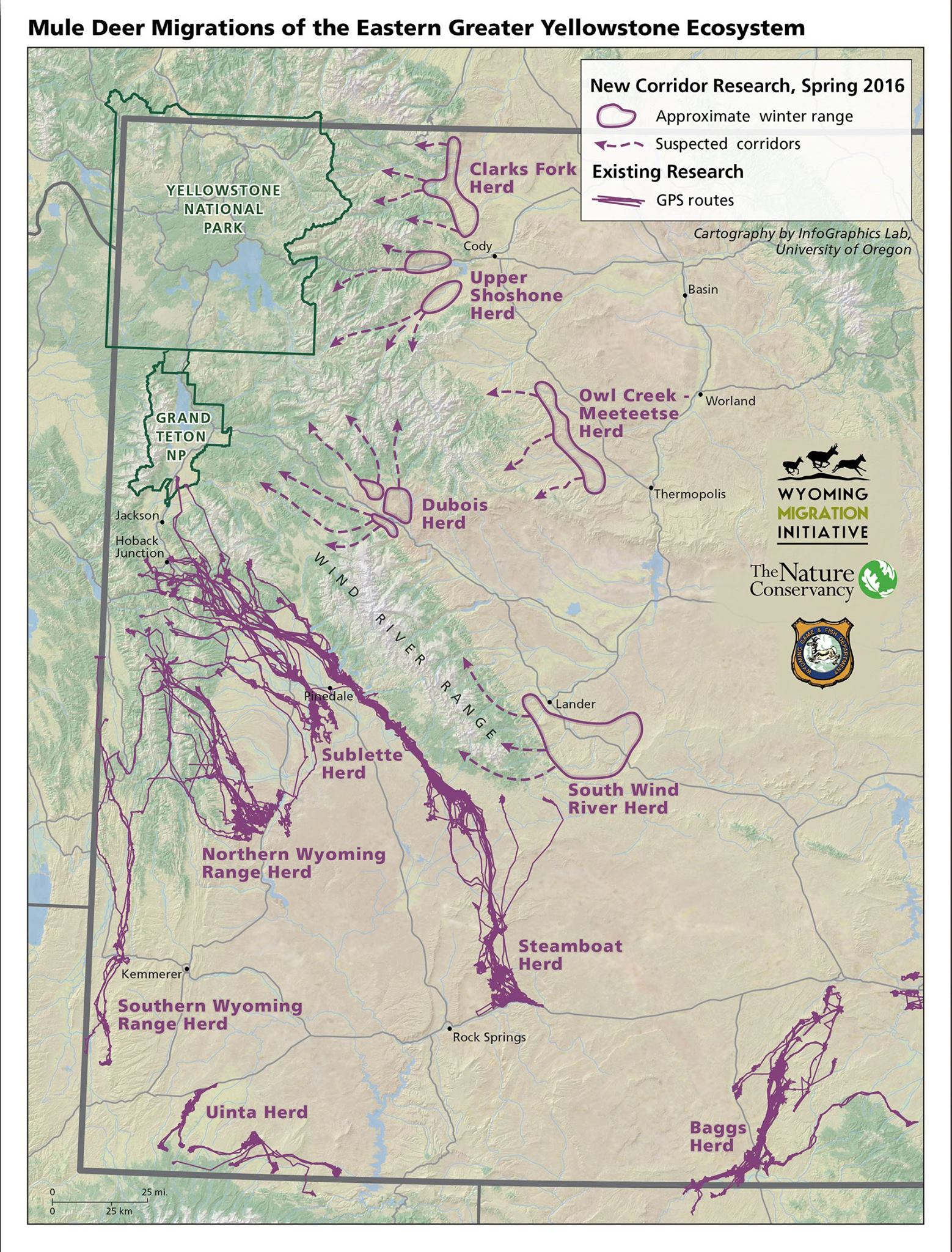 BIOLOGISTS LAUNCH STUDY OF GREATER YELLOWSTONE MULE DEER MIGRATIONS | Wyoming Migration Initiative